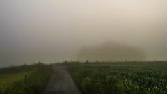 Misty Morning (Netsrak) Tags: road trees light sky mist tree green field fog rural fence way de landscape deutschland licht haze nebel outdoor path strasse feld eifel land grn zaun landschaft bume baum nordrheinwestfalen dunst rheinbach lndlich strase