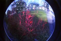 Lomo Fisheye 2 camera Multiple Exposure. (rpennington9) Tags: lomo lomography lomographic lomofisheye lomofisheyeiicamera lomofisheye2cameras tennessee chattanooga multipleexposure colorsplashflash film 35mm kodak kodakgoldmaxfilm iso400