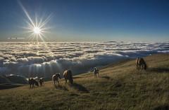 Gorbeian (Jabi Artaraz) Tags: jabiartaraz jartaraz zb euskoflickr gorbea niebla montaña euskadi bizkaia araba álava zeanuri zuia yeguas caballos potros landscape paisaje natura nature