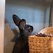 bunny periscope up