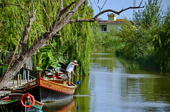 A Living on the Water (gerard eder) Tags: world travel reise viajes europa europe espaa spain spanien see valencia albufera albuferalake lagodelaalbufera boats boote barcas outdoor nationalpark parquenacional naturschutzgebiet