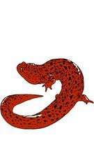 Giant Red Salamander (nathannethis) Tags: fantasysalamandercreature fantasysalamander animals hybridanimal lizard dragon finalfantasy slime slimy mythical elemental firesalamander sao swordartonline oblivion morrowind skyrim monster toxic poisonous poison herpetology herp amphibian salamander creature spotted newt salamandercreature giantsalamander redsalamander