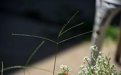 Bird food :-) (Dotsy McCurly) Tags: bird food tall grass grasses seeds yard plants nature beautiful smile dof bokeh nikon d750 nj