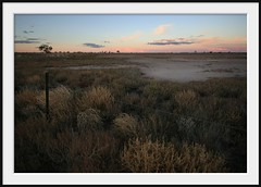 out back of bourke (Andrew C Wallace) Tags: bourke nsw australia outback tumbleweeds fenceline biglap08