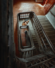 """""""Procrastination"""" (IrinaDzhul) Tags: people portrait girl stairs speculate afterthought stuck rhythm floor up depression sadness spiral"""