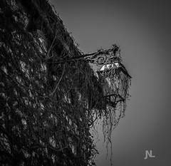 Castelnau de Montmiral (Janick Norman Leroy) Tags: midi pyrnes languedoc roussillon occitanie mediterrane castelnau de montmiral lampe lampadaire noir et blanc black white blanco y negro caractere mort exterieur branches arbres liere
