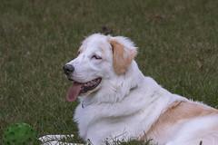 A big friend (Karibu kwangu) Tags: dog friend animal garden pet cane amico giardino