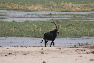 Namibia Dangerous Game Safari - Caprivi Strip 42