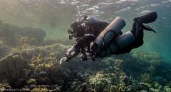 TigerCanyon/Dahab (VanessaCoronel) Tags: ocean sea photography underwater dahab redsea diving technical backmount