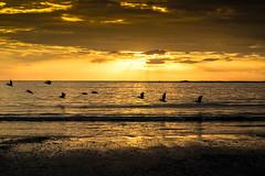 P1020628.jpg 3  .9 g (ChanHawkins) Tags: people beach pelicans birds lumix costarica samara fz1000 peopleatplaysunset