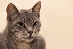 No Hocus Pocus (JourneySX30) Tags: love face cat eyes kat flash ogen liefde kop gezicht flits