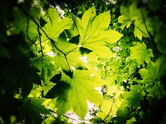Caught up in green (rowjimmy76) Tags: green nature portland hiking pacificnorthwest pdx pnw forestpark iphone6