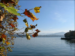 Lake Geneva, Switzerland (Wagsy Wheeler) Tags: mountain lake mountains alps leaves alpes switzerland suisse geneva geneve leman lakegeneva lacleman suiss