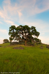 A Hill To Be On (Jared Ropelato) Tags: california sunset foothills tree green grass rock photography lava photo vacaville hills norcal jaredropelato ropelatophotography