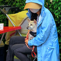 Masked Woman with Dog (Mondmann) Tags: woman dog pet animal mammal asia canine korea seoul southkorea rok adoption eastasia republicofkorea dogadoption maskedwoman itaewan mondmann canonpowershots120