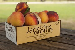 Cresthaven-8139 (Jackson's Orchard) Tags: kentucky peach orchard bowlinggreen bowlinggreenky cresthaven jacksonsorchard