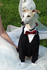 All Dressed Up (DiamondBonz) Tags: wedding dog hound handsome whippet ring tuxedo bearer spanky