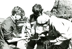 Students hold sea urchins (PUC Special Collections) Tags: california coastal mendocino 1960s norcal 1970s biology tidepools puc albion seaurchin seaurchins estuaries mendocinocounty pacificunioncollege albionfieldstation albionbiologicalfieldstation pucbiologydepartment