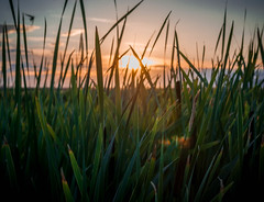 Sunset Through the Reeds (allie.hendricks.photography) Tags: year 2015