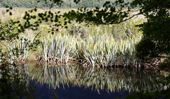 {Mirror Lake Image)FCC149