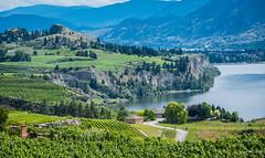 2016 - Road Trip - Penticton BC - 8 of 8 (Ted's photos - For Me & You) Tags: lake water vines nikon vineyards cropped vignetting okanaganvalley skahalake 2016 okanaganfalls mountainvalley mountainscene tedmcgrath cans2s tedsphotos nikonfx nikond750 sahalakebc