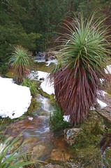 Pandani (shinbonerbaz) Tags: mountain sony australia tasmania alpha dt cradle a57 α pandani minoltaamount sal18250 sonydt18250mm