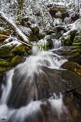Myrtle Forest Creek Cascade (Cameron Semple - http://highandwide.com.au) Tags: myrtleforestcreek myrtlegully snow wellingtonpark tasmania