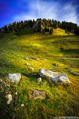 Natural Symmetry (PhilippN.83) Tags: berg mountains alps alpen bayern bavaria clouds wolken trees bume yellow geldb blue blau sky himmel wiese field canon eos 70d rock fels stone stein gras