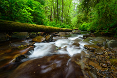 oswald west state park landscape (Sam Scholes) Tags: arch cape landscape soft nature water stream state park oswald west trees beach oregon beautiful motion south green softness westsouth forest blur archcape motionblur oswaldwestsouth oswaldweststatepark statepark