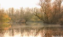 autumn @ the Biesbosch (gerardkanters.nl) Tags: herfstfotografie biesbosch workshop boottocht infogerardkantersnl