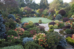 Colours of mid autumn in our upper garden (Four Seasons Garden) Tags: four seasons garden uk england west midlands walsall autumn 2016 october japanese maples acers leaves begonia flowers ornamental conifers blue red yellow orange apricot yorkstone evergreens colour