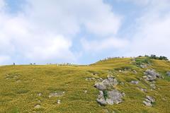 (&)   @ Sixty Stone Mt., Hualien, Taiwan  (Jia  ) Tags:                taiwan hualien mountain flower yellow rock sky blue cloud clouds landscape outdoor view gf2 panasonic