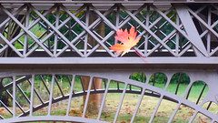one colourful leave 20160925_083152 (hans 1960) Tags: autumn herbst herbstzeit oktober blatt leave eiffelturm eisen red fall nature natur germany outdoor farben colour