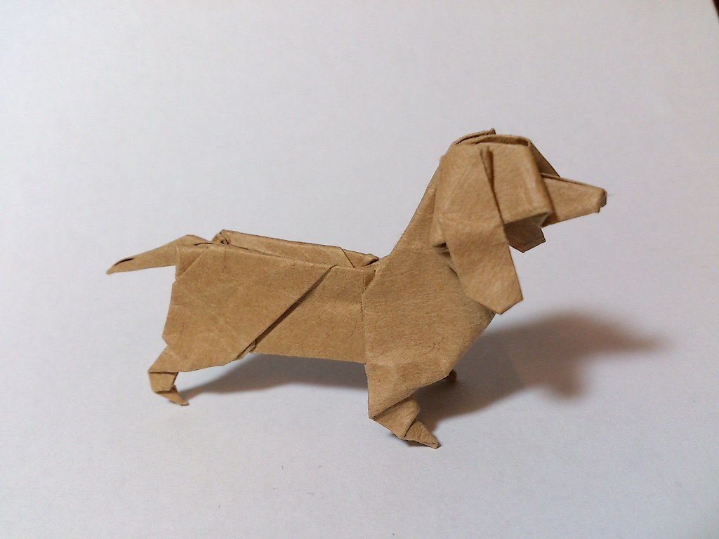 the worlds best photos of dachshund and origami flickr