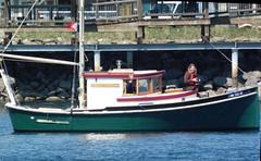 P1000170CE1 - Port Townsend WA - PTYC Opening Day - MV BLUE STAR (BlackShoe1) Tags: sailboat boat washington olympicpeninsula wash porttownsend pacificnorthwest wa pugetsound tug woodenboat washingtonstate bluestar powerboat cruiser openingday porthadlock woodboat jeffersoncounty porttownsendbay porttownsendwa accumar porthadlockmarina victorianseaport scottsprague mvbluestar ptyc eastjeffersoncounty utilitytug utilitytugboat designerscottsprague openingdayporttownsend openingdayporttownsendwa accumarcorporation porttownsendyachtclub