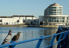 Fancy a night at the Ramada? (tabulator_1) Tags: pigeons southport ramada marinelake