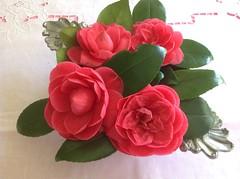 Camélias (Annelise LE BIAN) Tags: france sunshine closeup fleurs rouge explore damn camélia coth supershot alittlebeauty fantasticnaturegroup