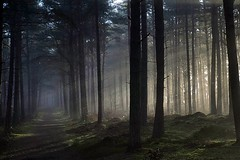 5-4-2015 (Copperhobnob) Tags: wood trees sun mist forest fife atmosphere possibly ladybank
