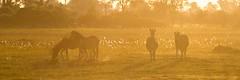 Zebras at Dusk (masong2011) Tags: africa dusk wildlife zebra botswana okavango zebras okavangod