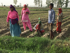 Day Laborers Standing with Hand Hoes in a Crop Field (IFPRI-IMAGES) Tags: family boy india plant field season children workers corn women village outdoor farm farming grain cereal grow vegetable soil health crop produce farmer sack agriculture yield process maize cultivation sustainable pulses burlap nutrition southasia manoli haryana fertile shuck sonipat smallfarms foodsecurity agriculturaldevelopment micronutrients rowcrops ifpri