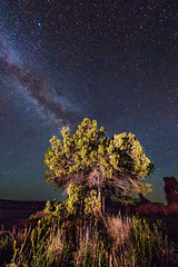([ raymond ]) Tags: newmexico southwest tree nature stars universe darksky milkyway americansouthwest img9316