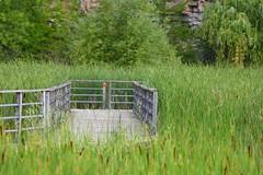 Kerncliff (Peter Granka) Tags: kerncliffpark kerncliff boardwalk marsh petergranka burlington nature