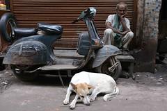 The Kashmir State of Mind (Mayank Austen Soofi) Tags: delhi walla kashmir gloom dog