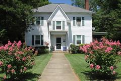 Crepe Myrtles one year later (and HWW!) (karma (Karen)) Tags: baltimore maryland home frontyard houses windows trees crepemyrtles hww