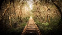 To the beach... (Augmented Reality Images (Getty Contributor)) Tags: australia bark boardwalk canon eucalyptus ferns forest gumtree landscape leaves leefilters nature peregianbeach queensland trees
