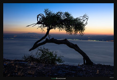 Bent Tree (Ilan Shacham) Tags: landscape view scenic tree minimalism water lake sea kinneret seaofgalilee fineart fineartphotography dawn sunrise israel bent