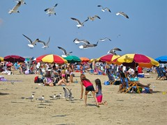 Seagull beach (US Department of State) Tags: seagulls beach birds umbrella sand beachumbrella