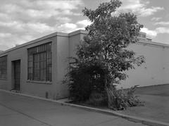 Light Industry (geowelch) Tags: downtowneast toronto urbanfragments urbanlandscape constructionsite tree sky clouds industrial blackwhite film 120 mediumformat txp320 trix fujigs645s plustekopticfilm7400 645 6x45 hc110