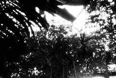 Glasgow Botanic Gardens (nils_aksnes) Tags: blackandwhite bw glasgow pinhole ilford wppd worldwidepinholephotographyday ondu ondu135