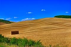 Collina d'oro (giannipiras555) Tags: nuvole fiori toscana collina paglia